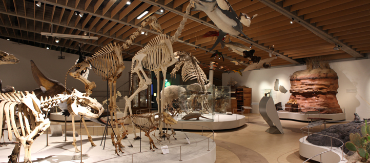 Natural History Museum Of Denmark Zoological Museum